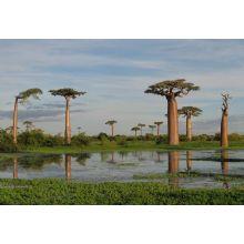 on line il nuovo sito Madagascar