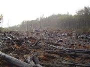 deforestazione del madagascar